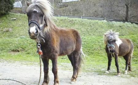 two brown horses with light manes