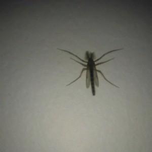 Identifying a Flying Bug