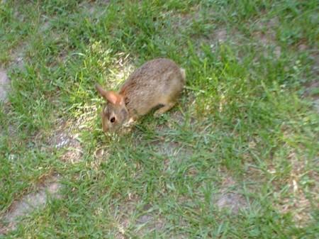 A orphaned rabbit.