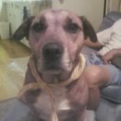 closeup of dog wearing a yellow scarf