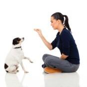 Basic Dog Training Tips