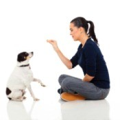 woman sitting down and training a dog