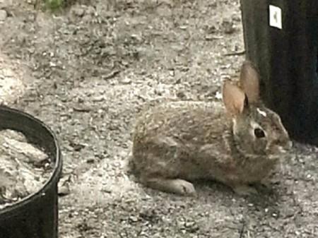 Robbie the rabbit.