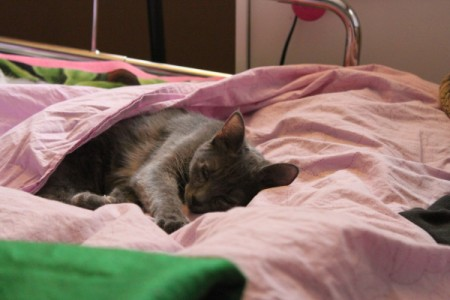 kitty under a blanket