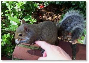 braveheart_squirrel.jpg