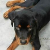 Puppy Afraid After Dog Attack