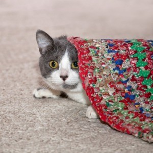 cat peeking out from under braided rug