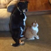 Mason and Mario in House