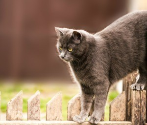 gray cat on fence