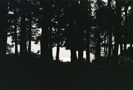 A forest scene in Kochi, India