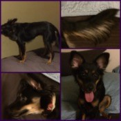 collage if photos of Roxy