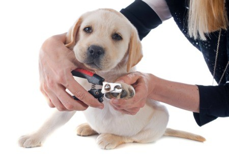 Trimming Your Dog or Cat's Toenails