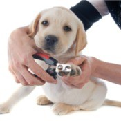 woman trimming a puppy's nails