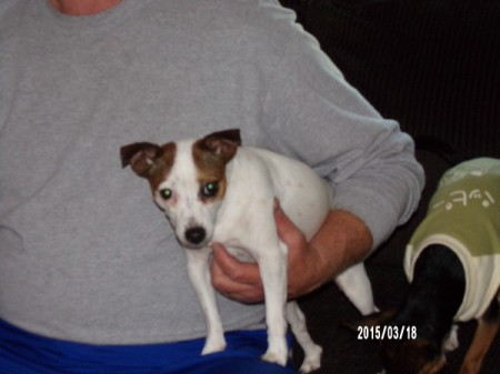 Lucy (Toy Fox Terrier/Chihuahua Mix)