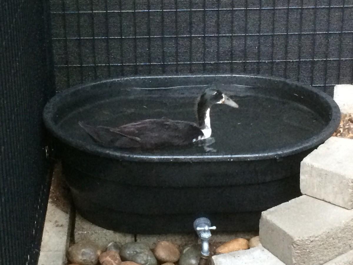 Making a Duck Pond | ThriftyFun