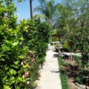 A pathway in a garden.
