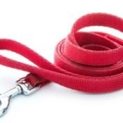 pink leash