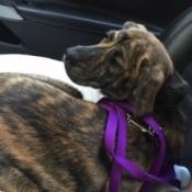 lyig in car seat