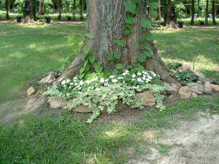 moonflower vine growing up a tree