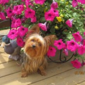 Sophie with potted petunias.