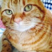 Jasper orange tabby cat