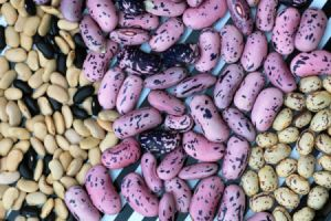 piles of dried beans