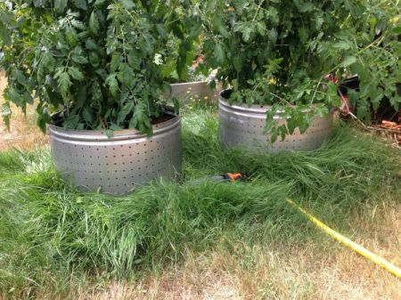 Washing Machine Tub Tomato Planters