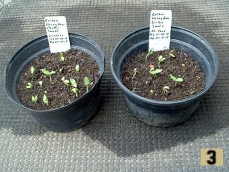 Should Floating Seeds Be Saved?