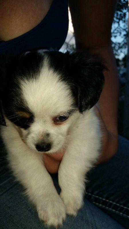 fuzzy black and white puppy