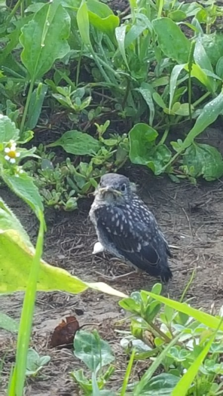 small speckled baby bird