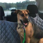sitting on car seat