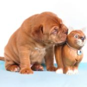 dog licking a toy cat