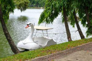 white swan paddle boat on lake or lagoon