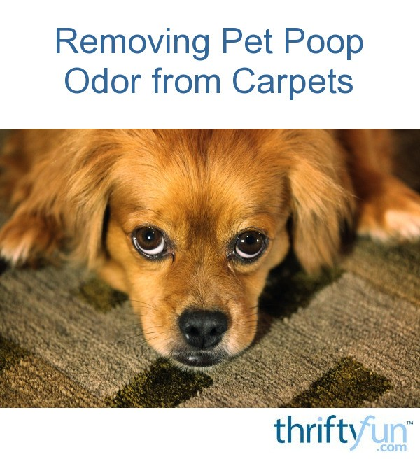 Removing Pet Poop Odor from Carpets | ThriftyFun