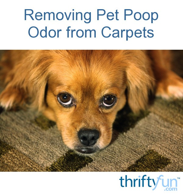 Removing Pet Poop Odor From Carpets