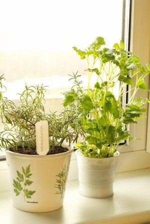 Garden Window Ideas