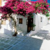 bougainvillea growing on house in Greece