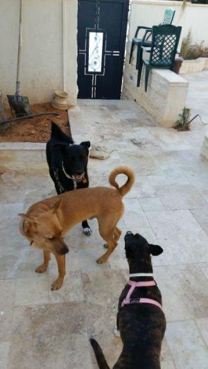 three dogs on deck