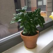 potted plant on window ledge