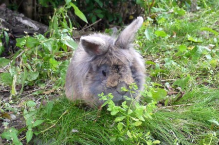 bunny nibbling on plant