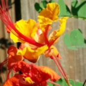 orange and yellow blooms