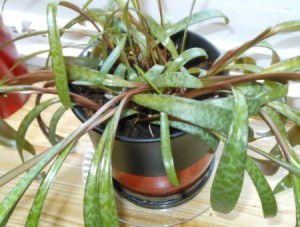 Identifying a Houseplant