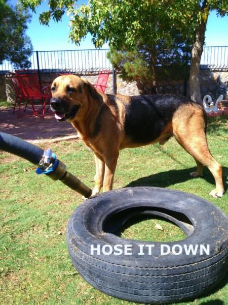 Recycled Tire Desert Garden