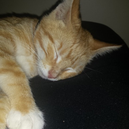 light orange tabby sleeping