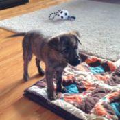 puppy on quilt