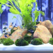 A home freshwater aquarium with lots of fish.