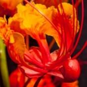 bright red, orange, and yellow flower