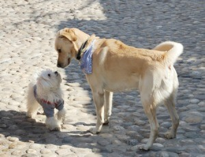 two dogs sniffing noses