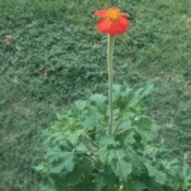 orange flower with yellow center
