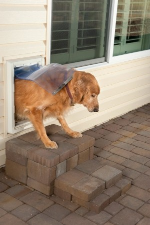 dog going out dog door